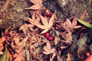 落ち葉と赤い実